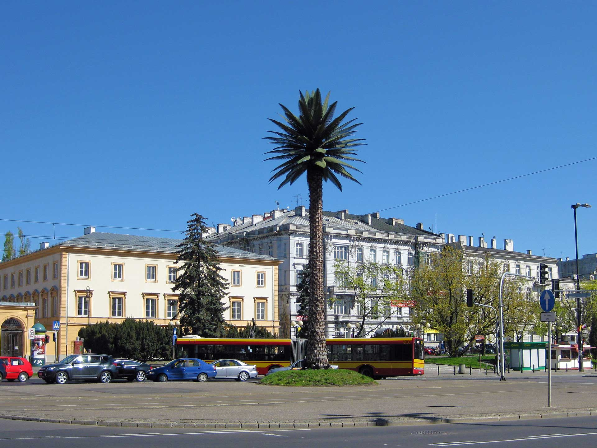 warsaw-palm-tree-1